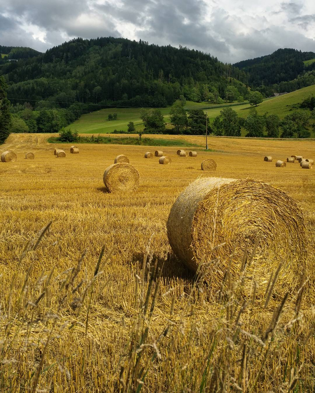A beautiful agricultural perspective