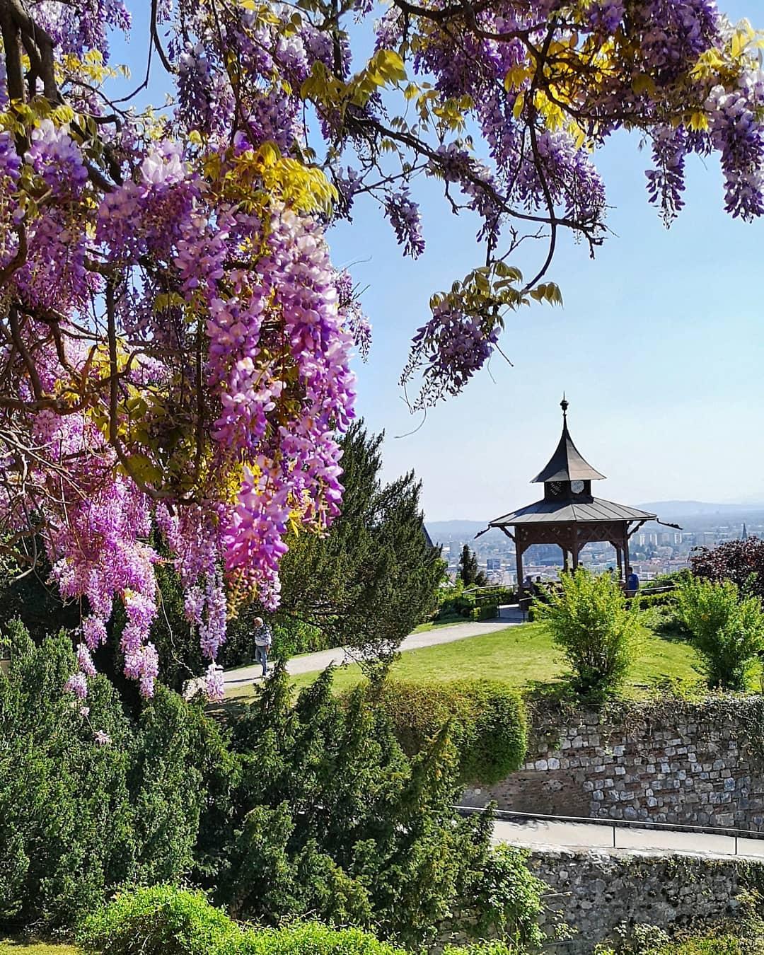 Blüten im Grazer Schlosspark