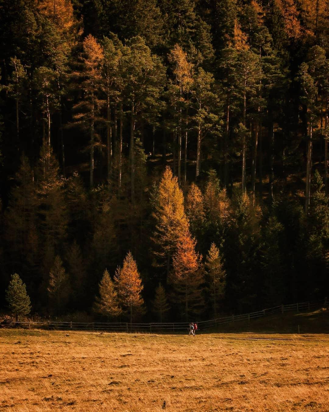 Blick auf ein Waldstück im Herbst