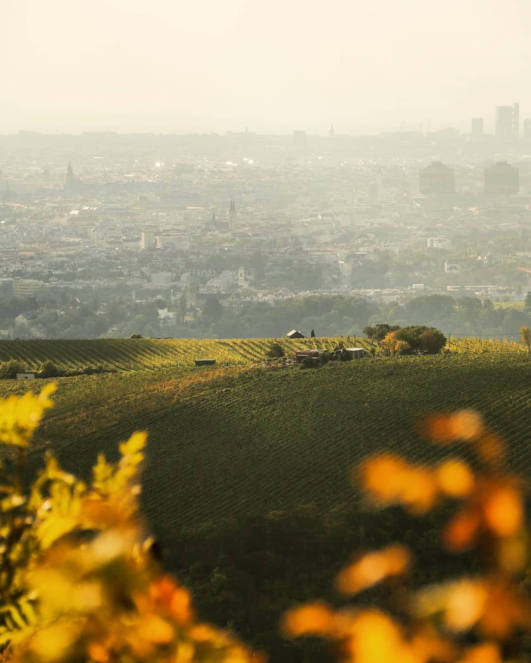 View of Vienna from Leopoldsberg