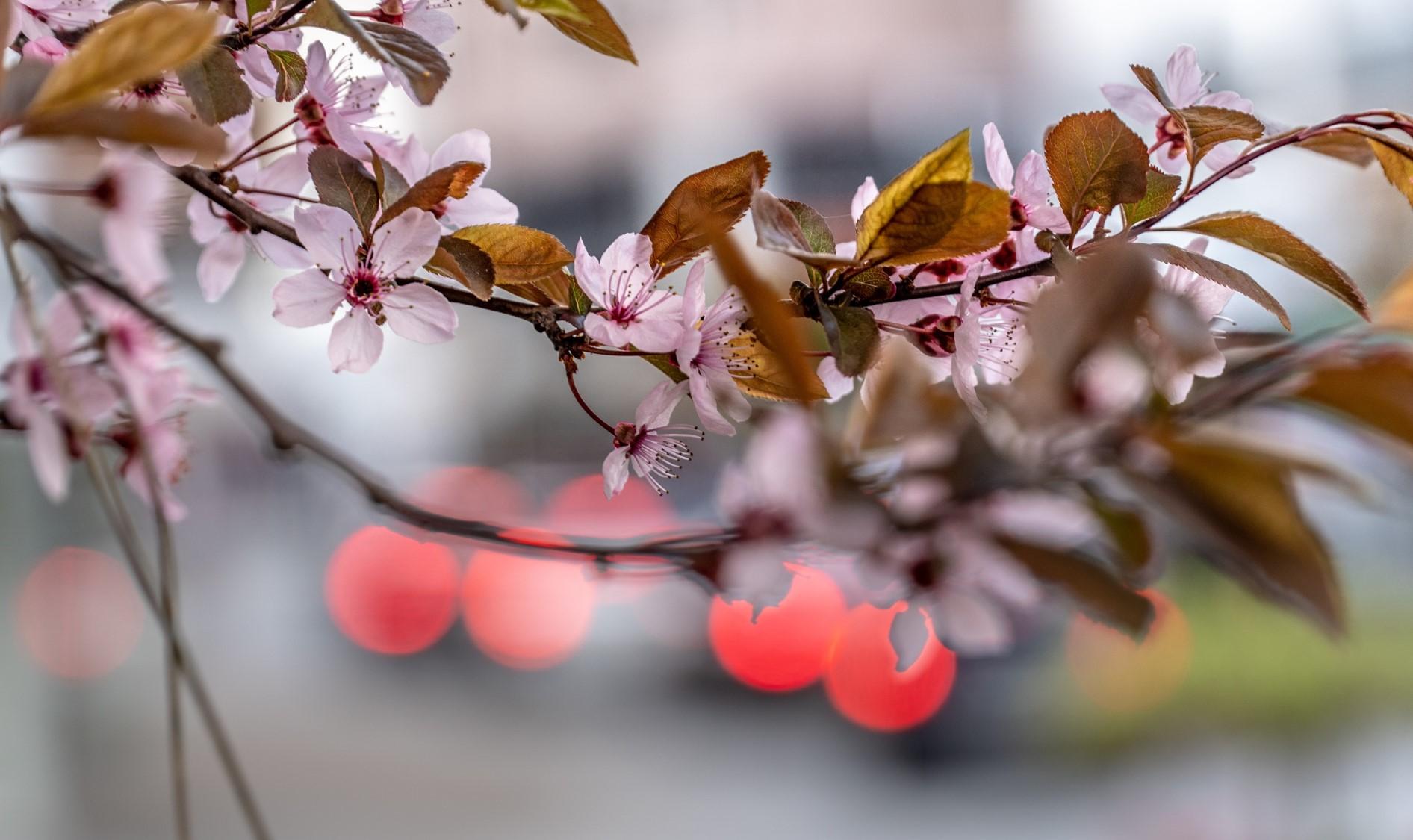 Frühlingshafte Stimmung in Wörgl
