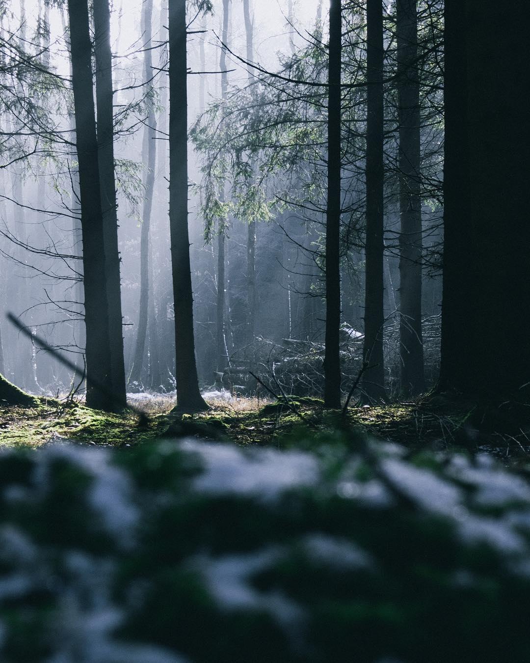 Wald in Niederneukirchen