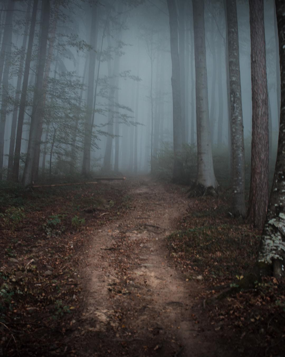 Waldstück am Damberg